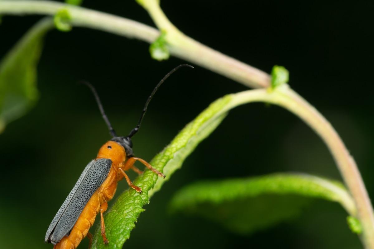 Observation, identification & recording ofinvertebrates